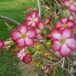 Exotische Blumen ...