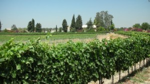 Boutique-Weingut Clos de Gat im Ayalon Valley